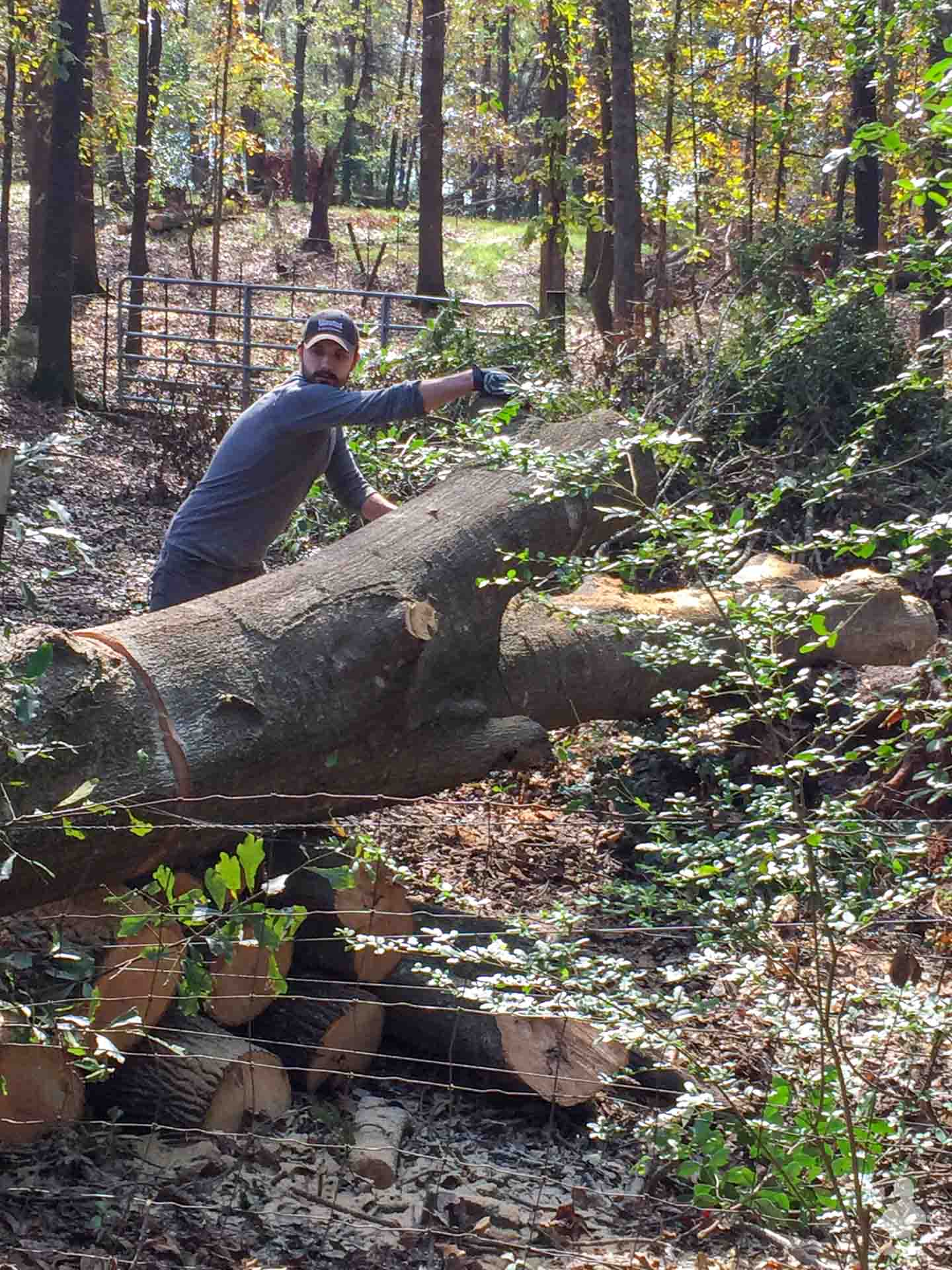 cutting down trees in Americus-5