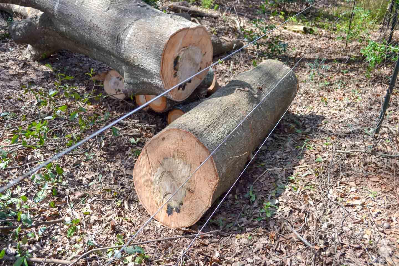 oak logs across fence line
