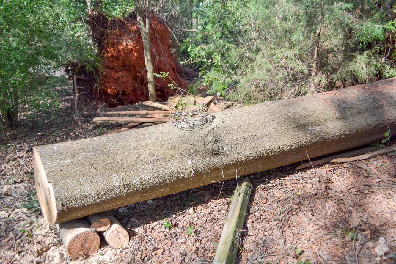 fallen oak tree in Georgia
