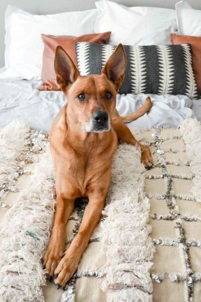Charlie modeling bedding