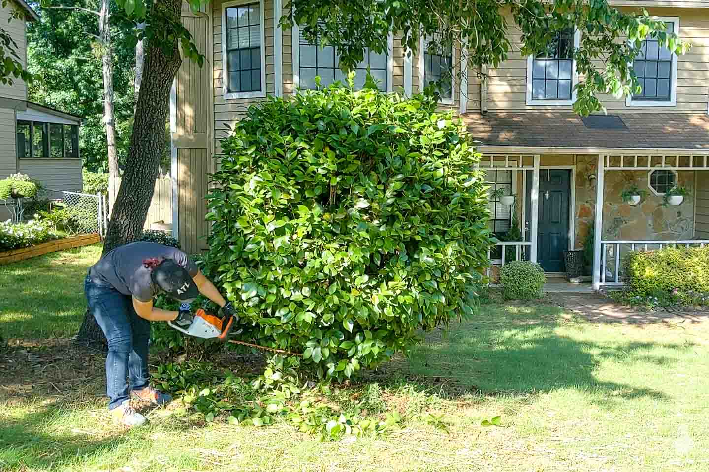 trim the base of the shrub to form a trunk