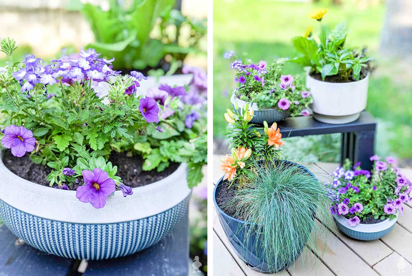 purple confetti mix and new planters for the deck