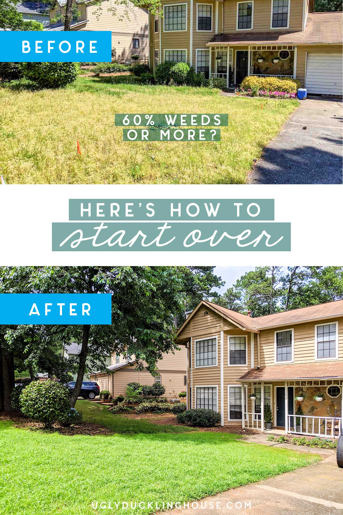 how to start over new lawn green grass - before and after