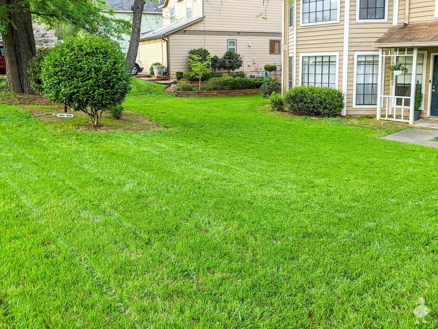 spring 2020 front yard lawn grass