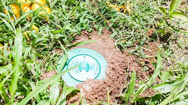 termite bait installation at ground level