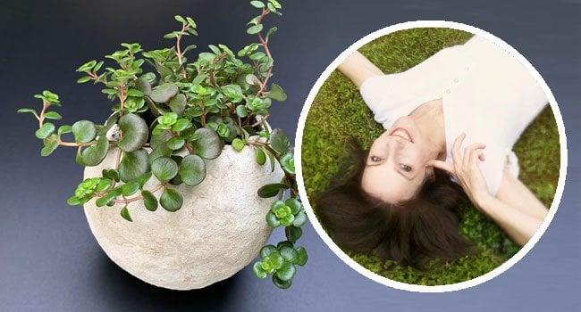 Ellen - Artsy Pretty Plants