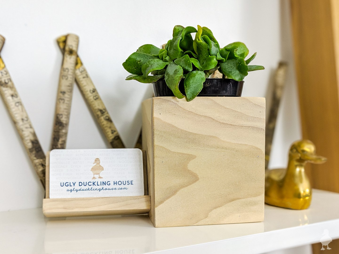 biz card holder with succulent planter combined