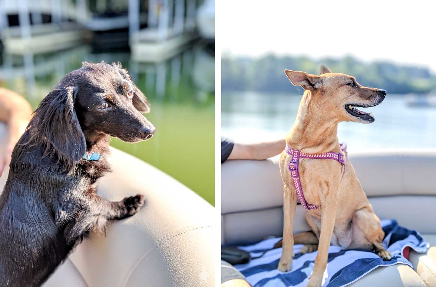 Stella and Charlie on a boat