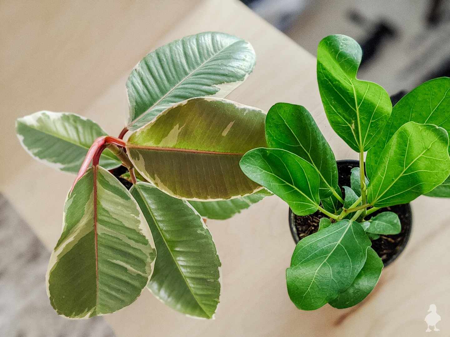 Buying Houseplants Online: What to Look For & My Fave Shops