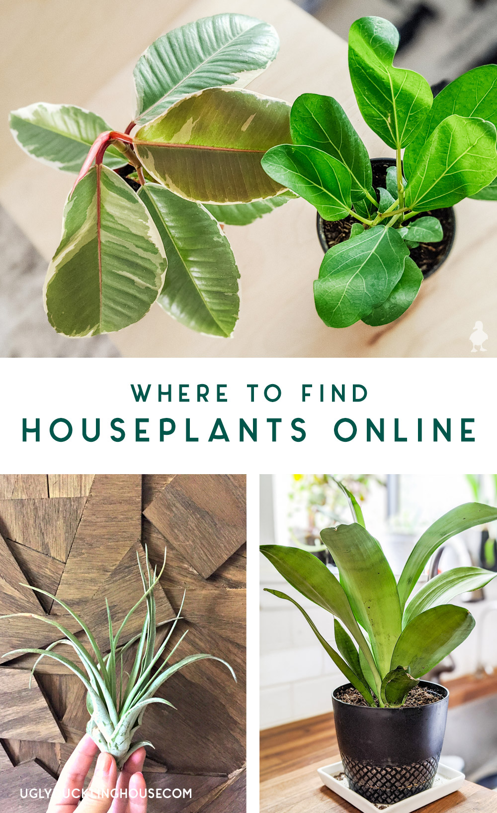 where to find houseplants online