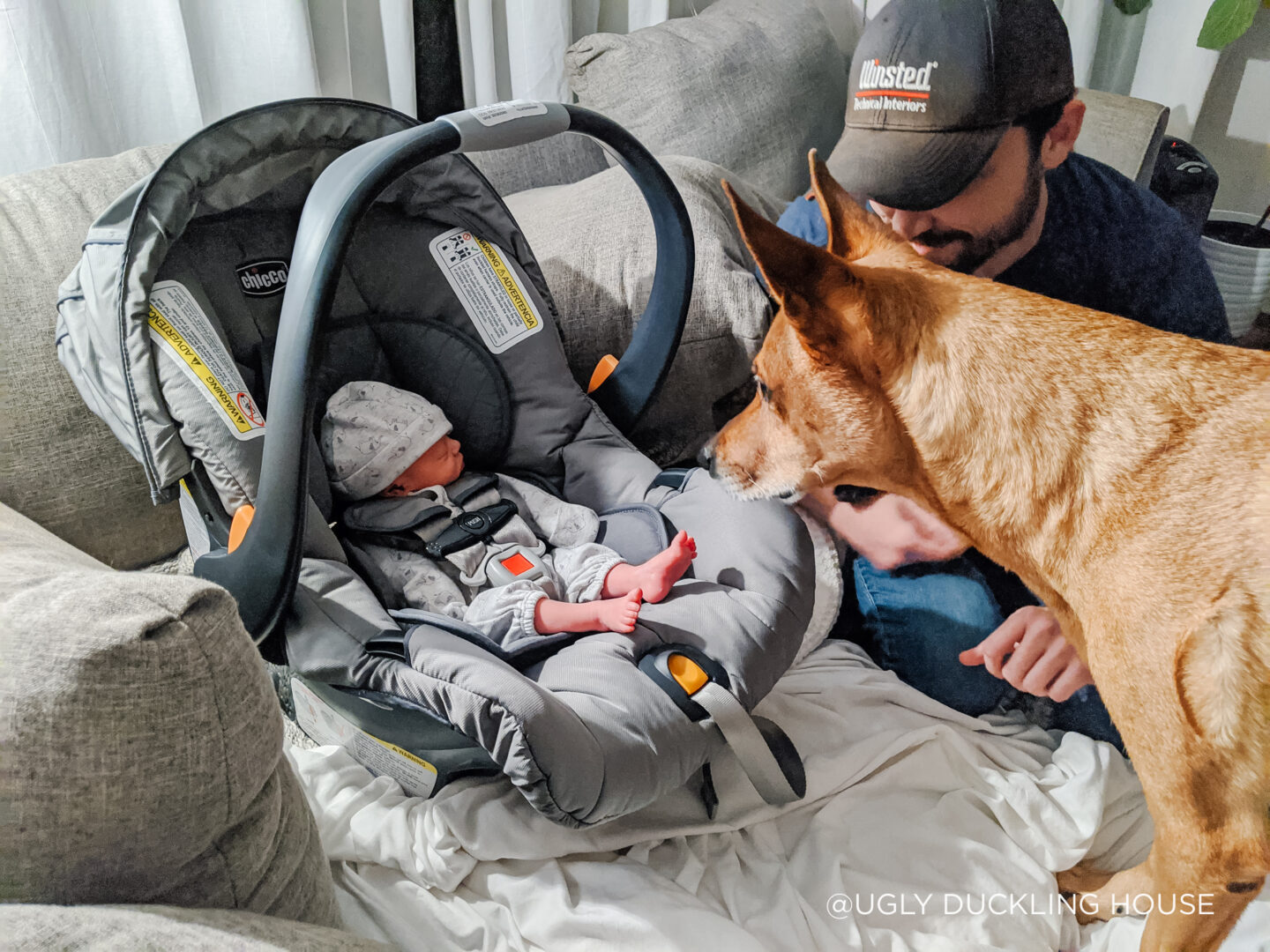 bringing baby home from hospital to meet dogs