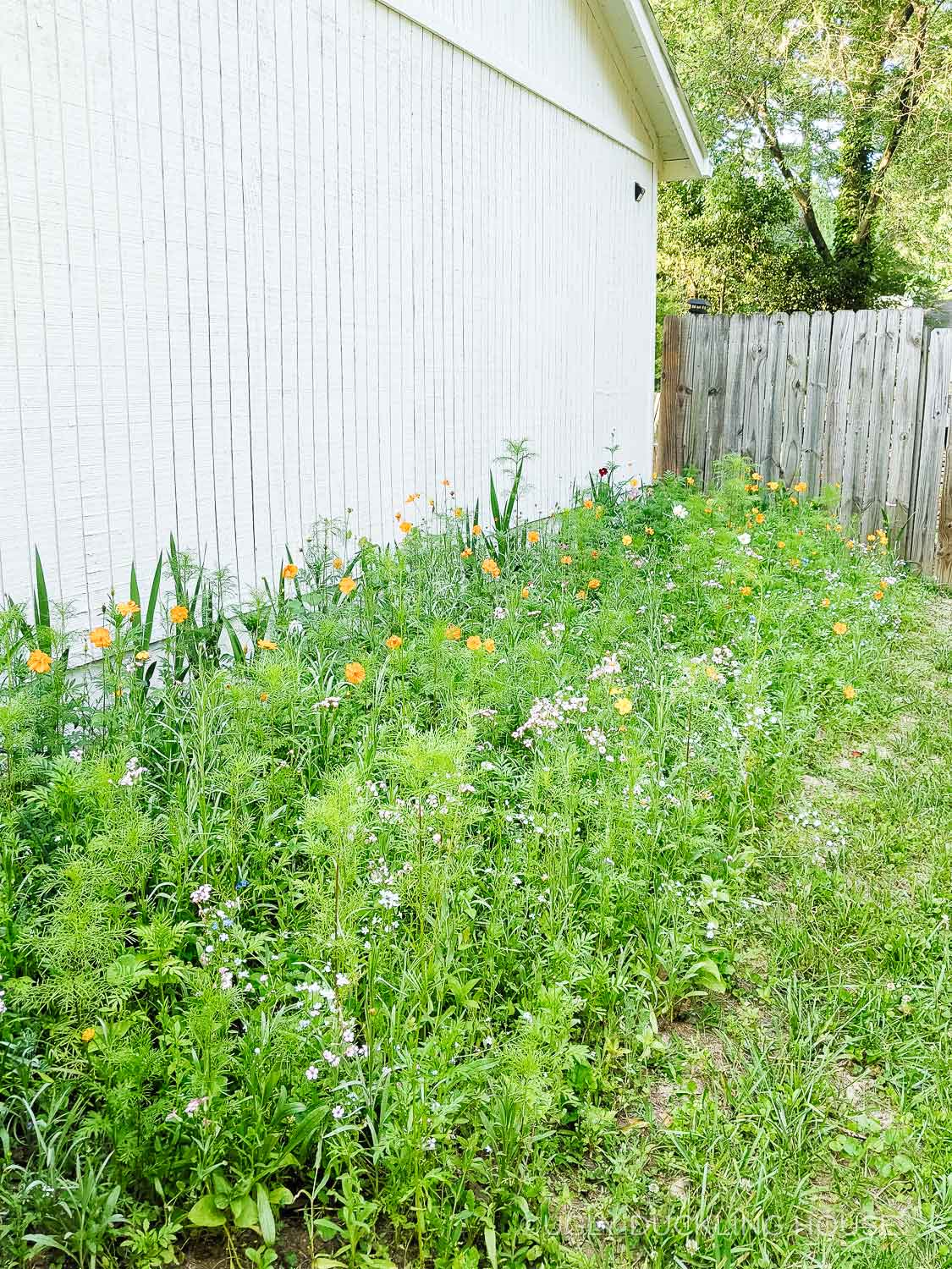 wildflower garden good for butterflies bees and other beneficial insects