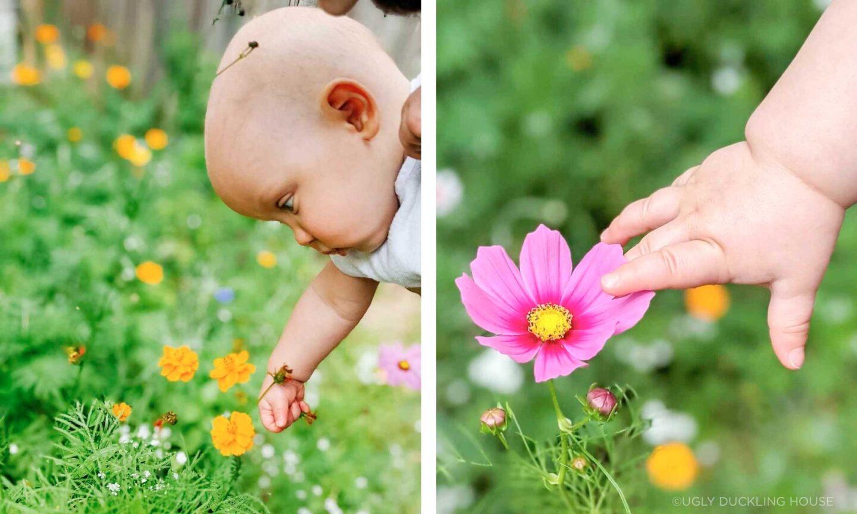Ellis loves the wildflower garden