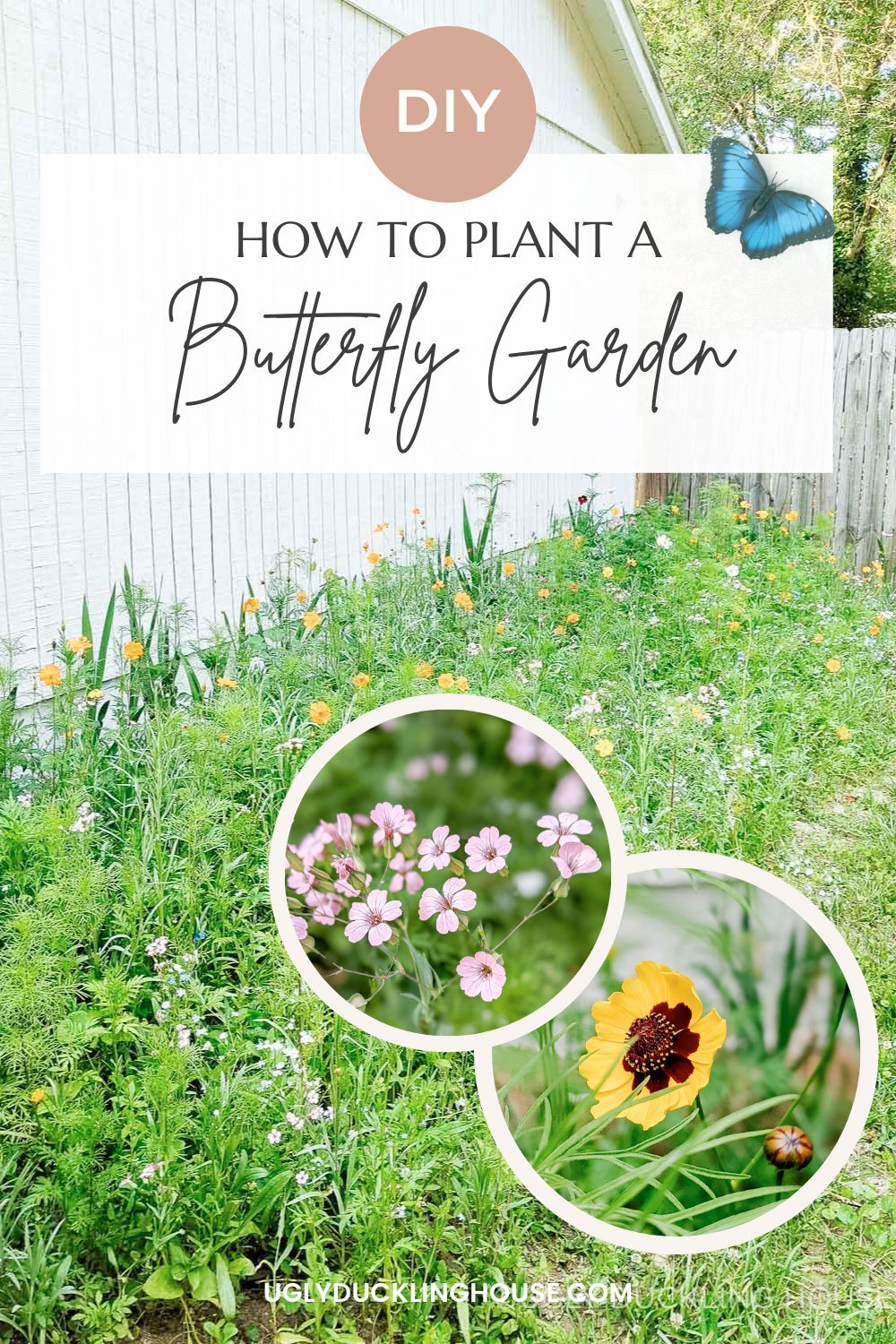 how-to-plant-and-grow-a-butterfly-garden-5-benefits